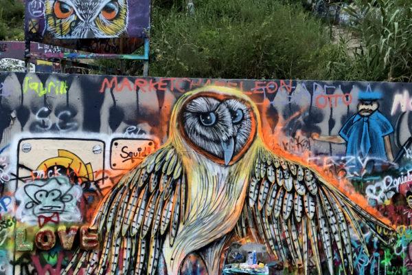 Font wall barn owl